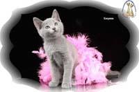 Котенок в доме - памятка