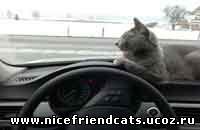 Путешествие с кошкой - автомобиль, самолет, поезд